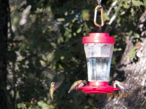 Hummingbirds at Feeder; Photo by B.Mitchem, Sept 2, 2013.
