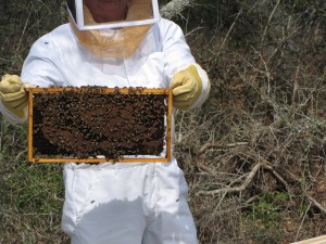 Bee Keeper at Oakridge, Photo by C.Jetton, Spring 2015.